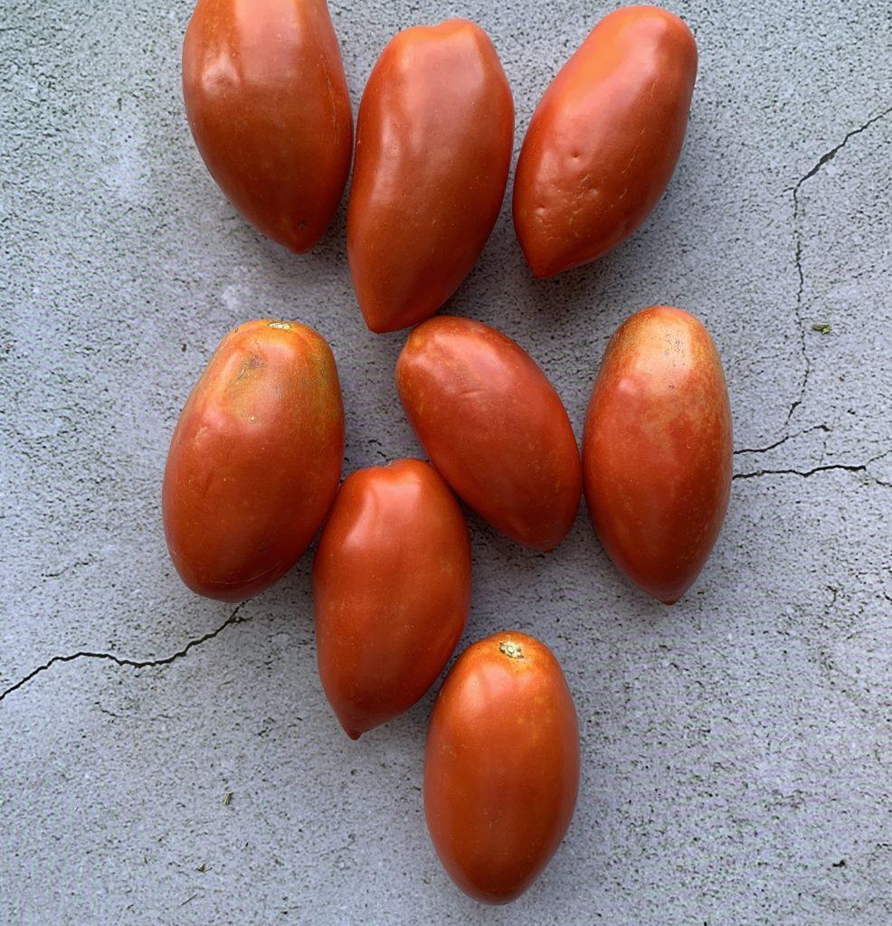 Paisano tomato