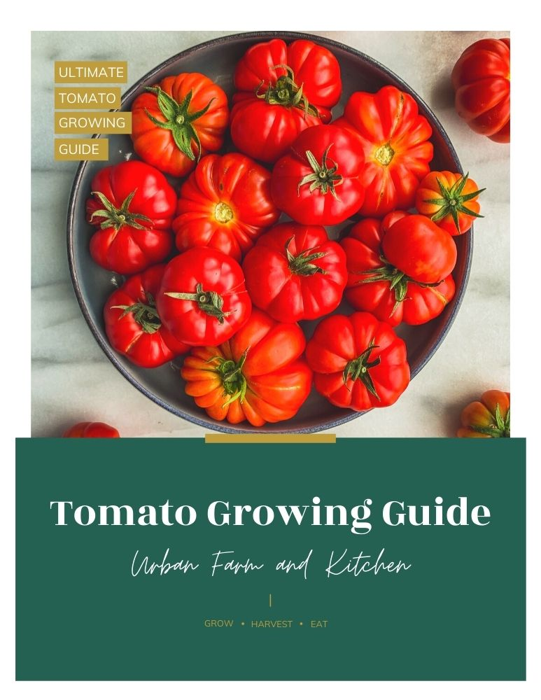 tomato ebook cover with red costoluto tomatoes in a bowl