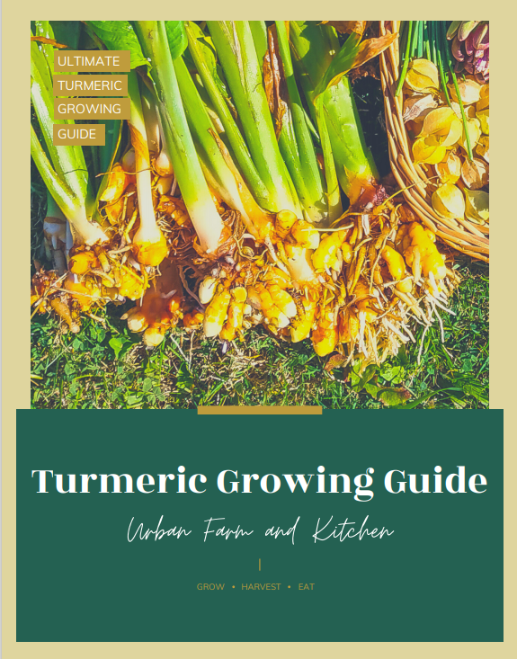 turmeric ebook cover with turmeric harvest image