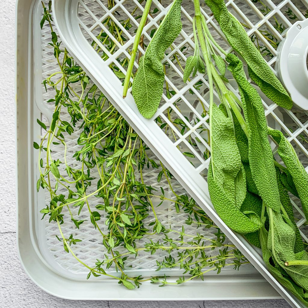 sage and thyme on a dehydrator rack.